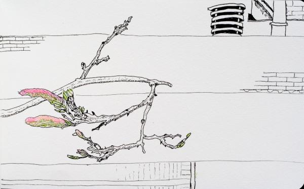 wisteria sketch