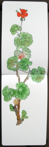 Geranium Watercolour